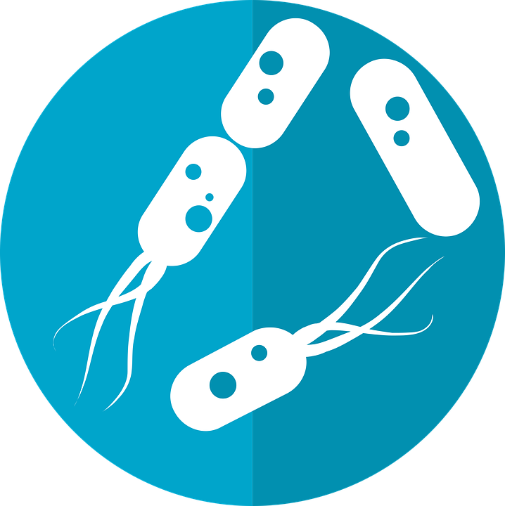 bacteria icon microbiome icon gut bacteria flora - Bacteria PNG HD
