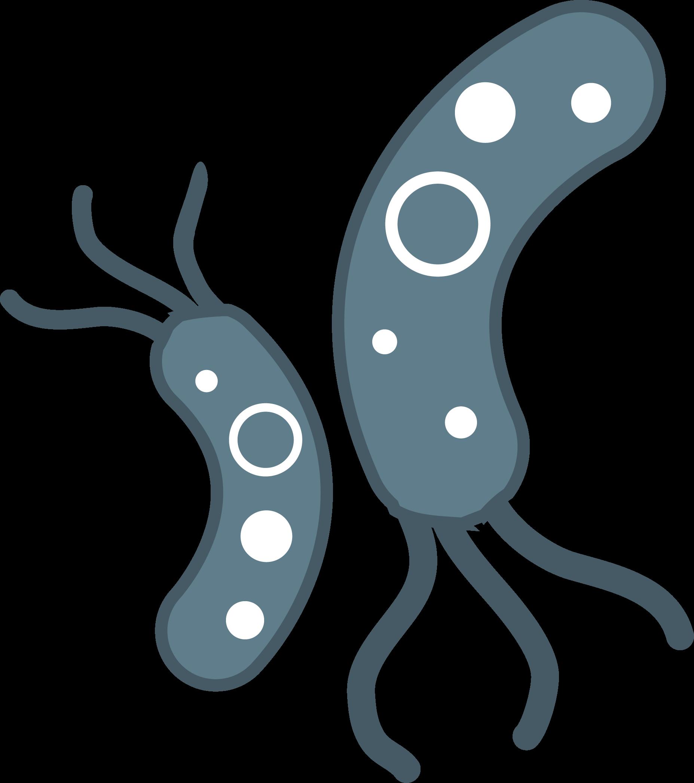 Bacteria PNG File - Bacteria PNG HD