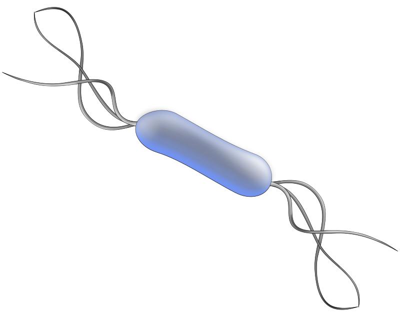 Download pngtransparent PlusPng.com  - Bacteria PNG HD