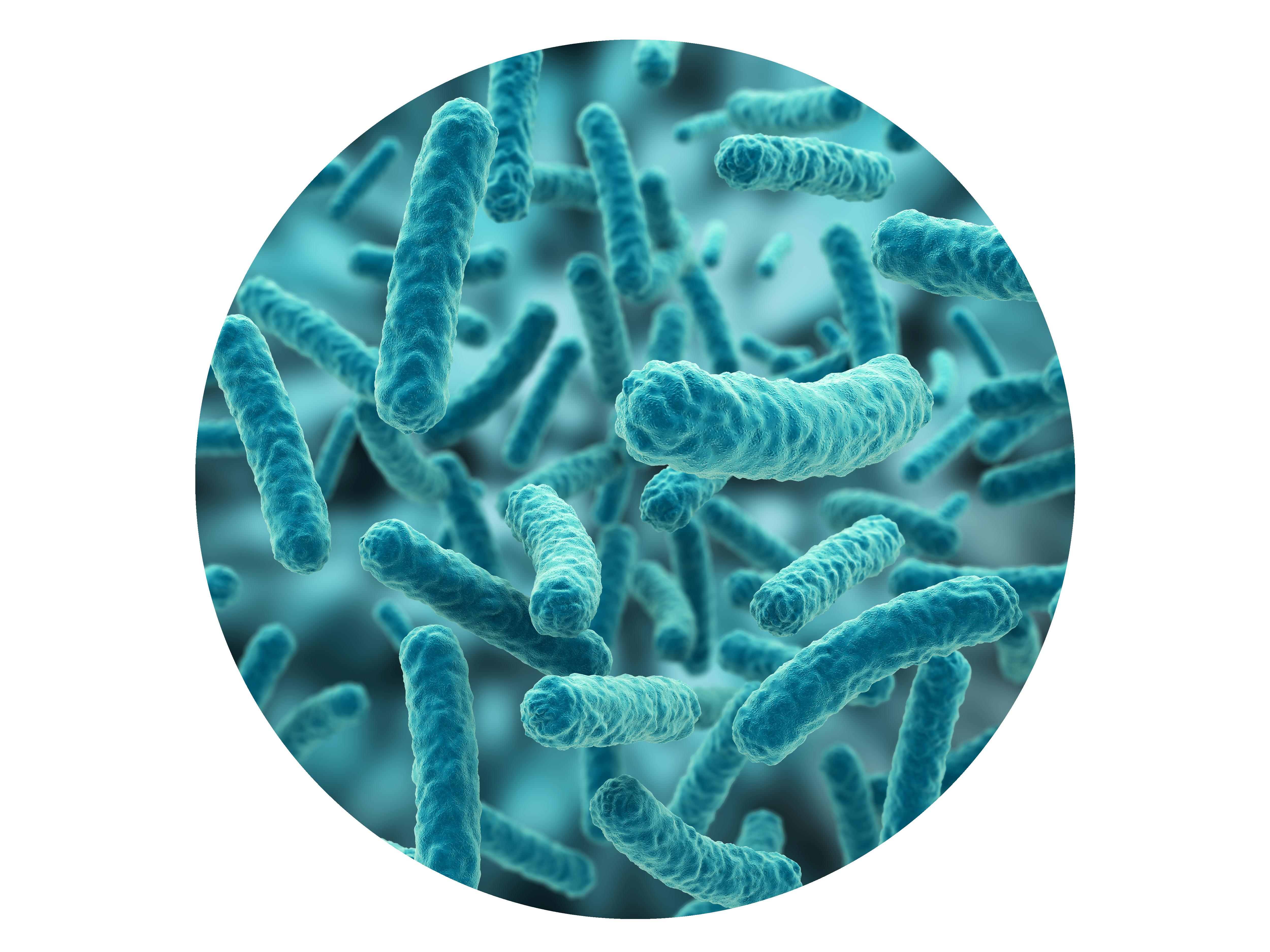 Understanding bacteria - Bacteria PNG HD
