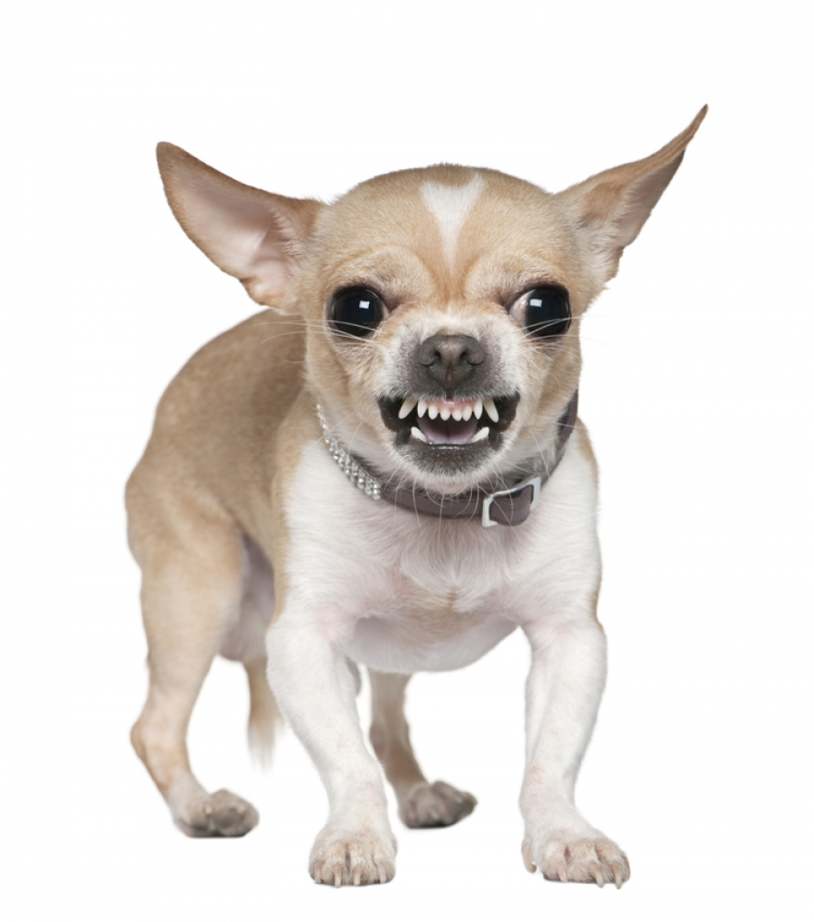 A dog that growls is not a bad dog - Bad Dog PNG