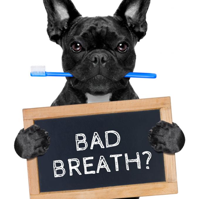 Bad Breath Dog - Bad Dog PNG
