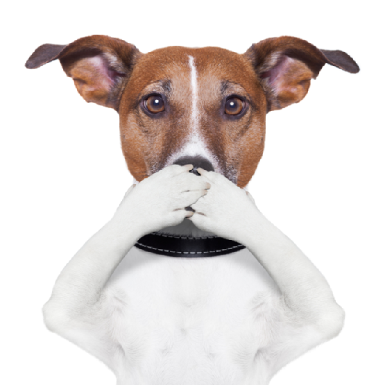 covering mouth dog - Bad Dog PNG