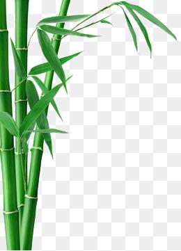 Bamboo PNG - 5964