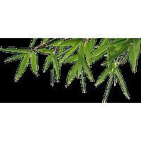Bamboo PNG - 5965