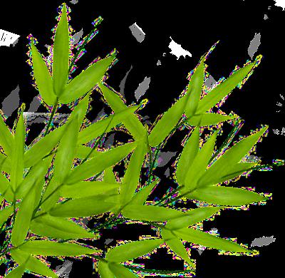 Bamboo PNG - 5969