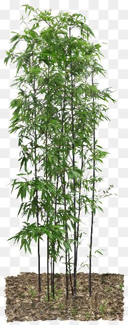 Bamboo PNG - 5974