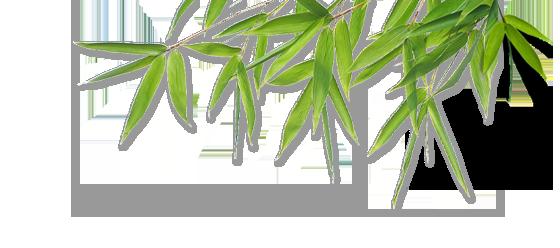 Bamboo PNG - 5972