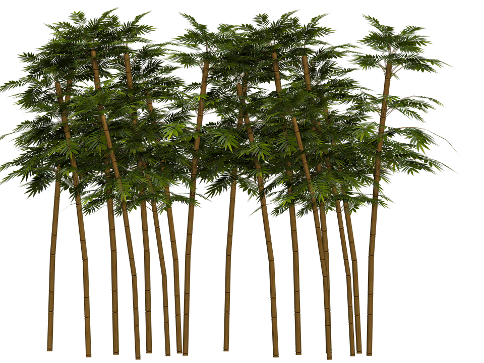 bamboo trees png - photo #4