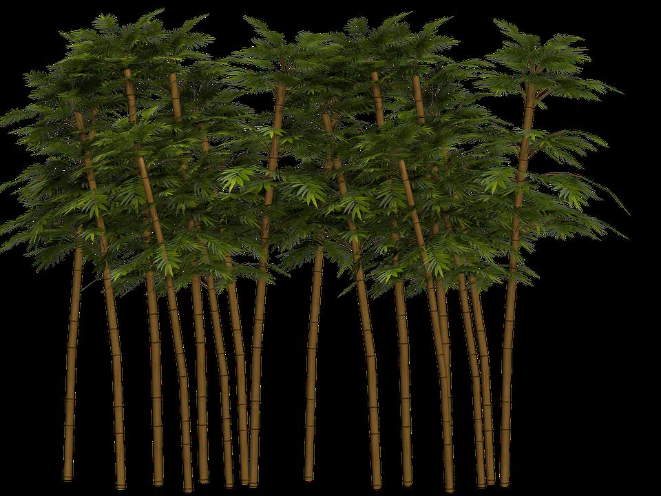 Bamboo PNG - 5959