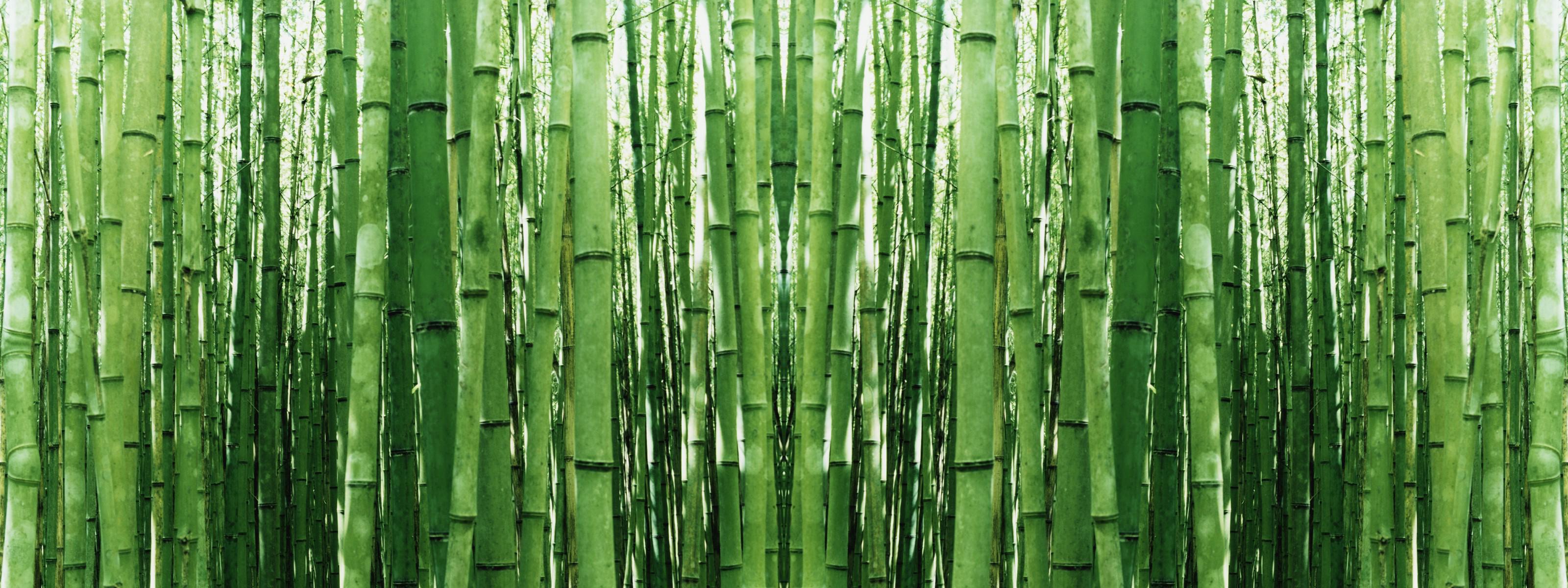 Bamboo PNG HD - 128775