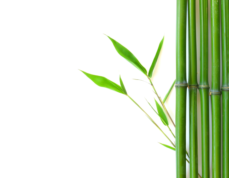 Bamboo PNG HD - 128777