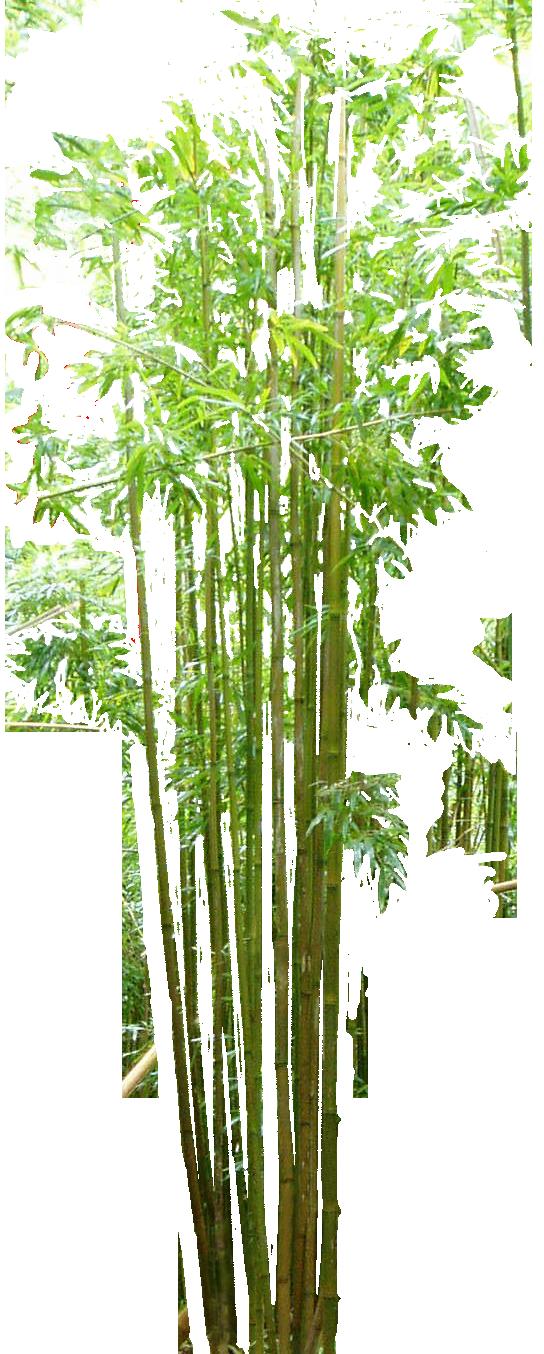 Bamboo PNG HD - 128774
