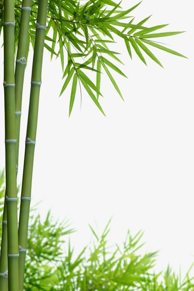 Bamboo PNG HD - 128771