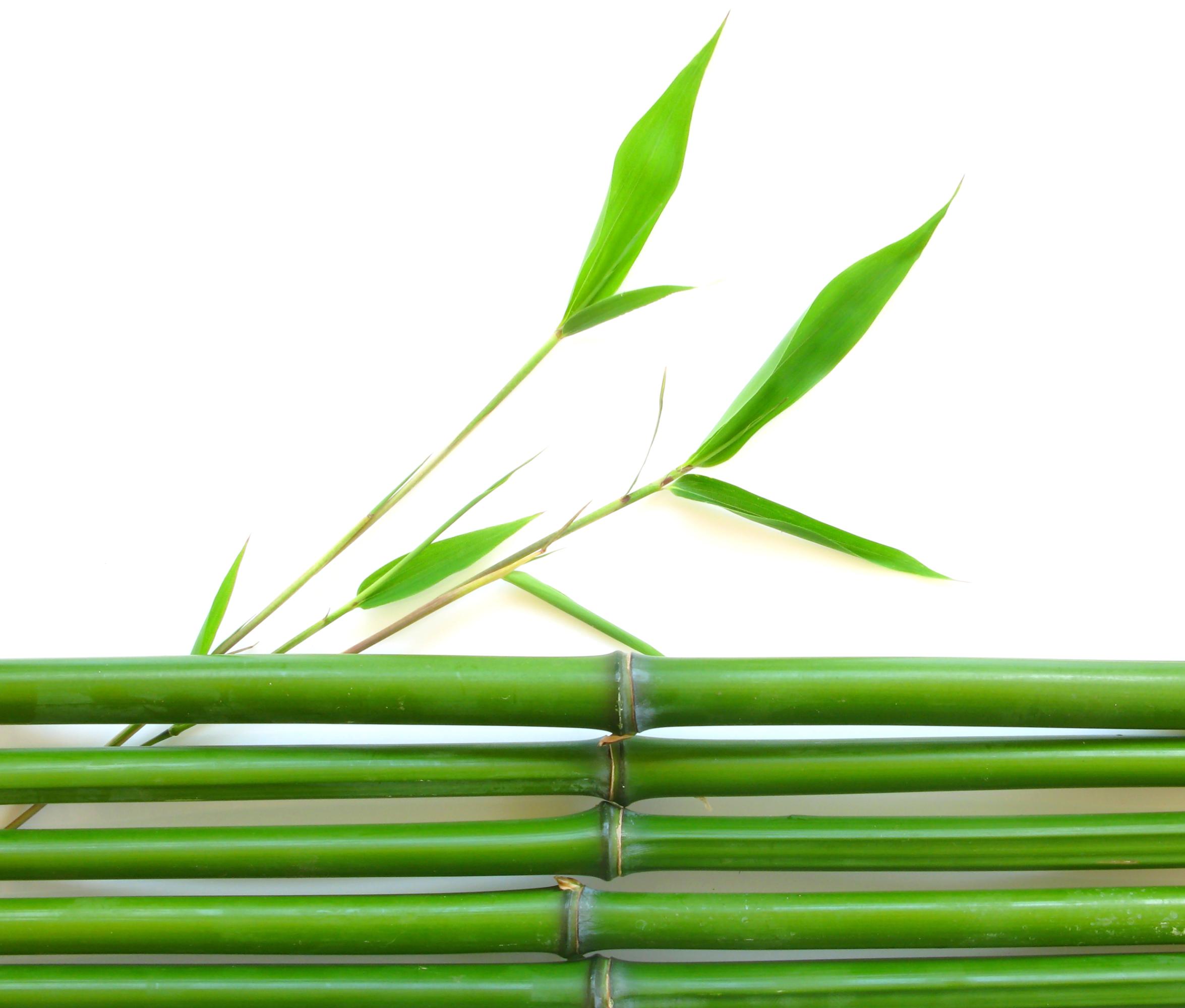 Bamboo PNG HD - 128778