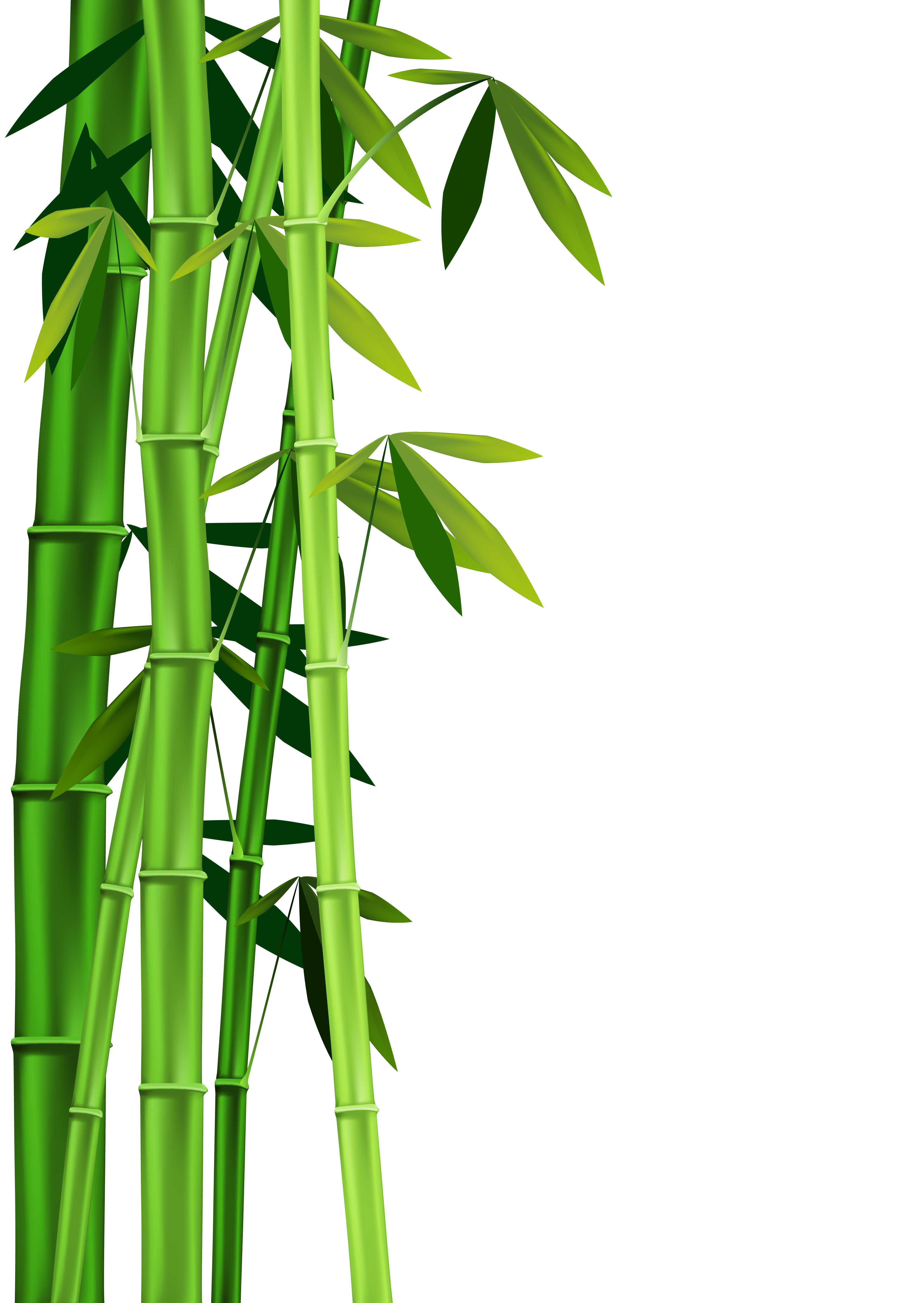 Bamboo PNG HD - 128773