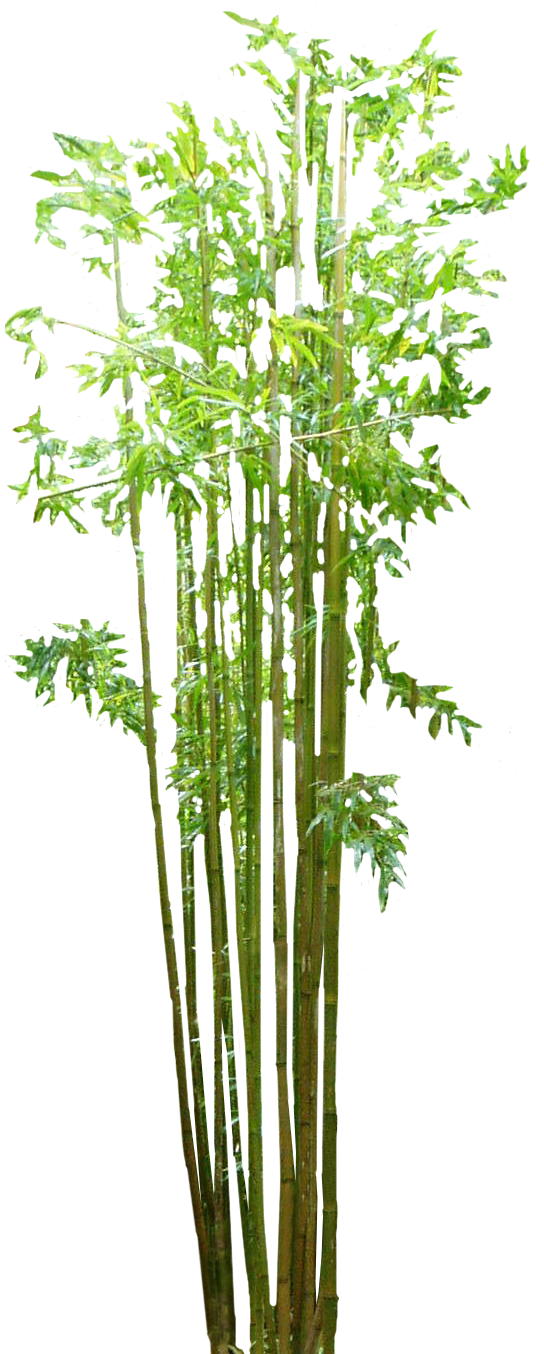 Bamboo PNG - 5963