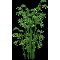 Bamboo PNG - 5960