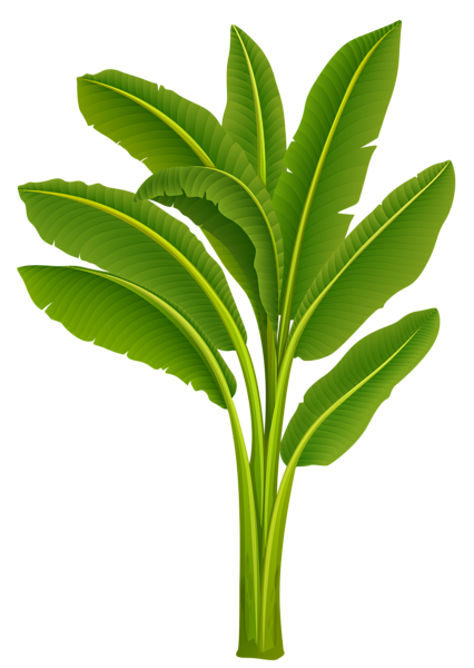 Banana_Tree_PNG_Image - Banana Tree PNG HD