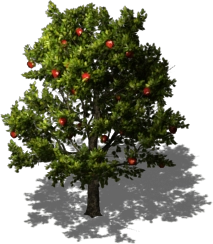 Bare Apple Tree PNG - 162312