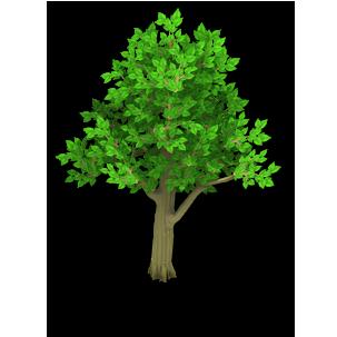 Apple Tree Stage 1 - Bare Apple Tree PNG