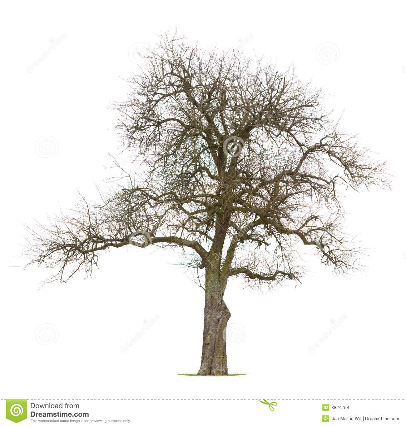 Bare branched apple tree Stock Images - Bare Apple Tree PNG