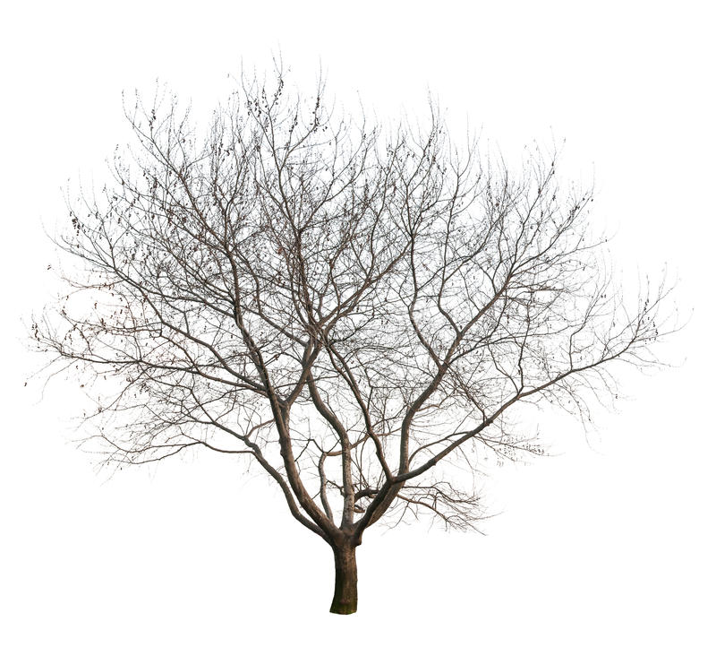 Bare Tree - Bare Apple Tree PNG