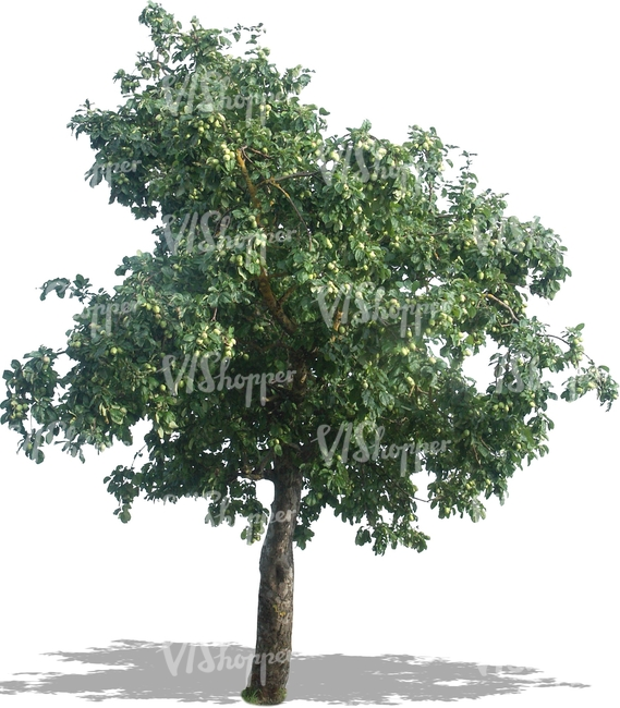 cut out apple tree with apples - Bare Apple Tree PNG