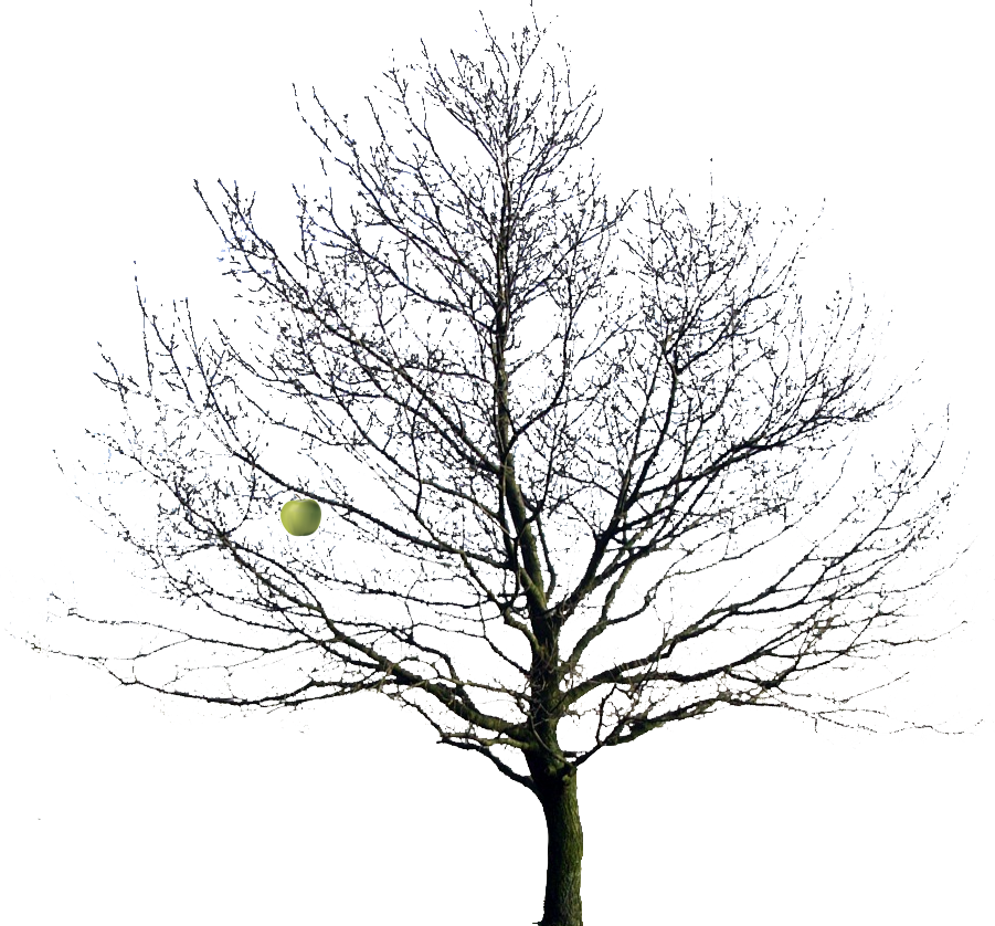 Bare Apple Tree PNG - 162310