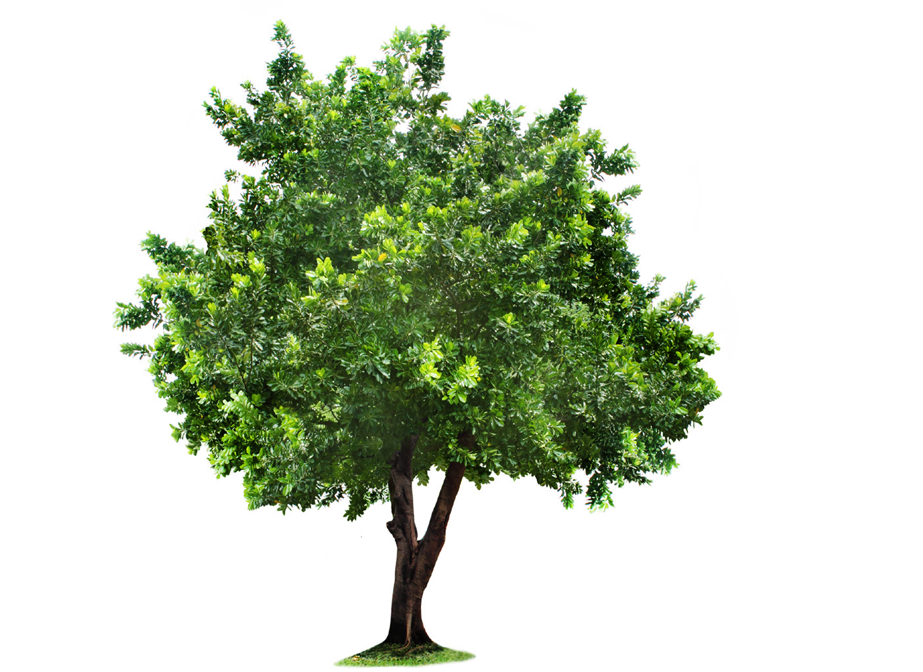 Tree 23 by Moonglowlilly - Bare Apple Tree PNG