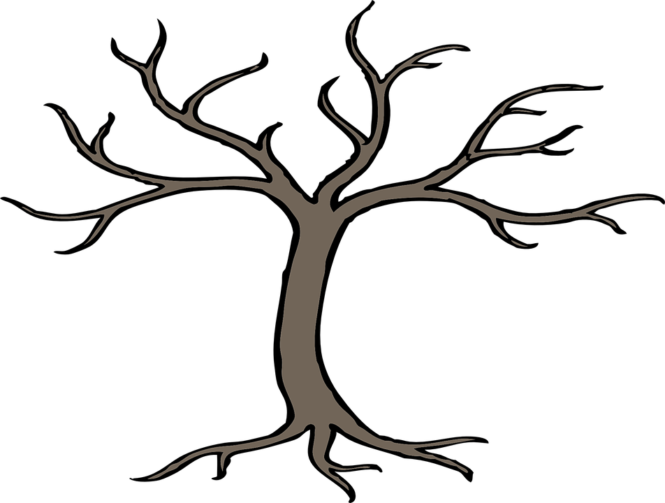 tree branches bare root winter forest nature - Bare Apple Tree PNG