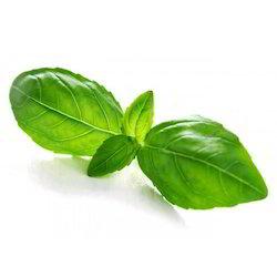 Basil Leaf PNG - 146294
