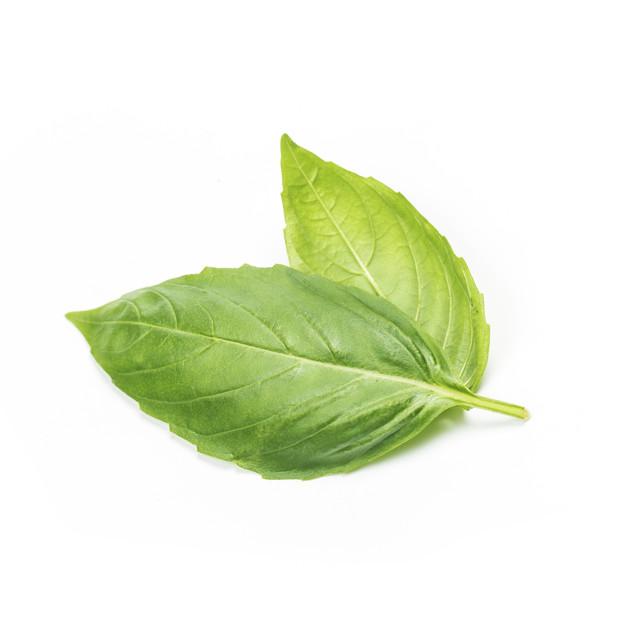 Basil Leaf PNG - 146295