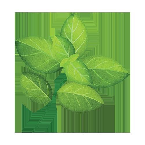 Basil Leaf PNG - 146310