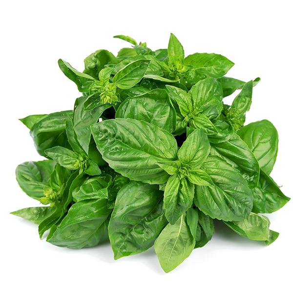 Basil Leaf PNG - 146305