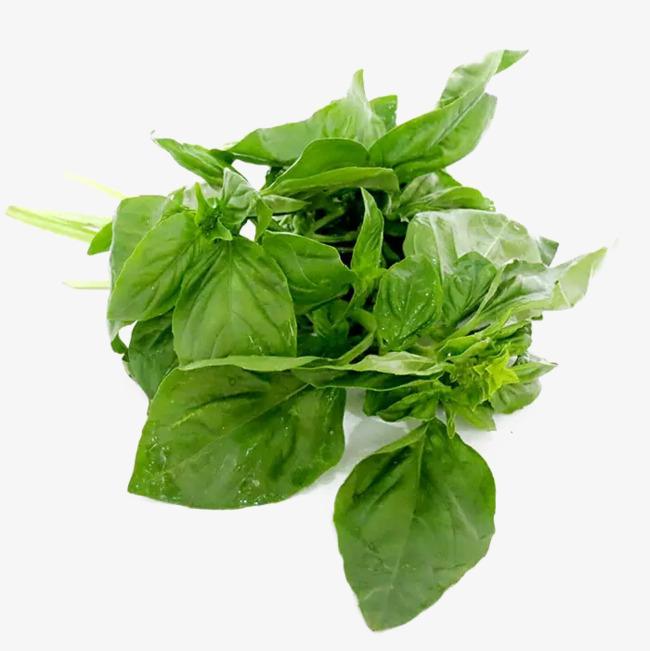 Basil Leaf PNG - 146292
