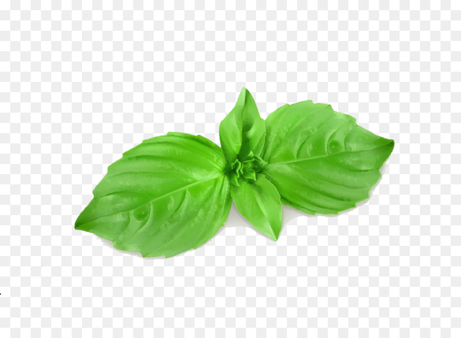 Basil Leaf PNG - 146299