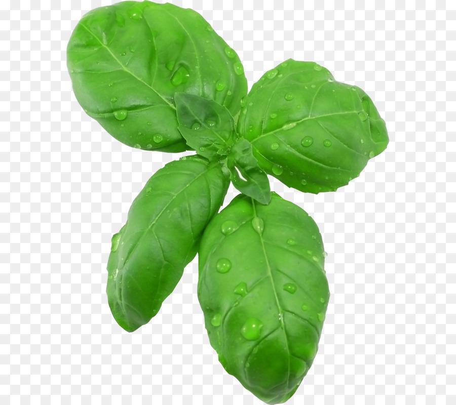 Basil Leaf PNG - 146306