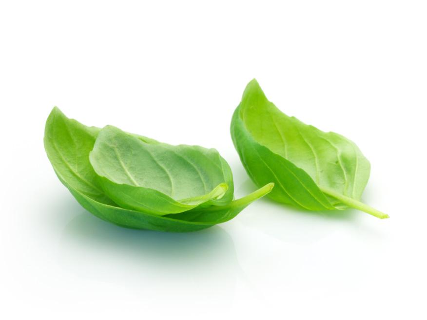 Basil Leaf PNG - 146311