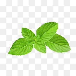 Basil Leaf PNG - 146302