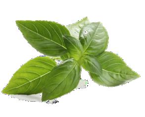 Basil Leaf PNG - 146304