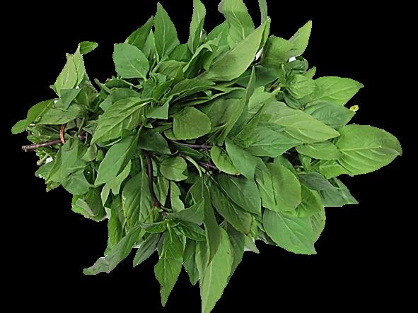 Basil Leaf PNG - 146303