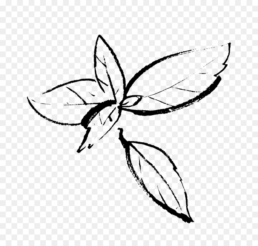Drawing Insect Organic beef Line art - basil - Basil PNG Black And White