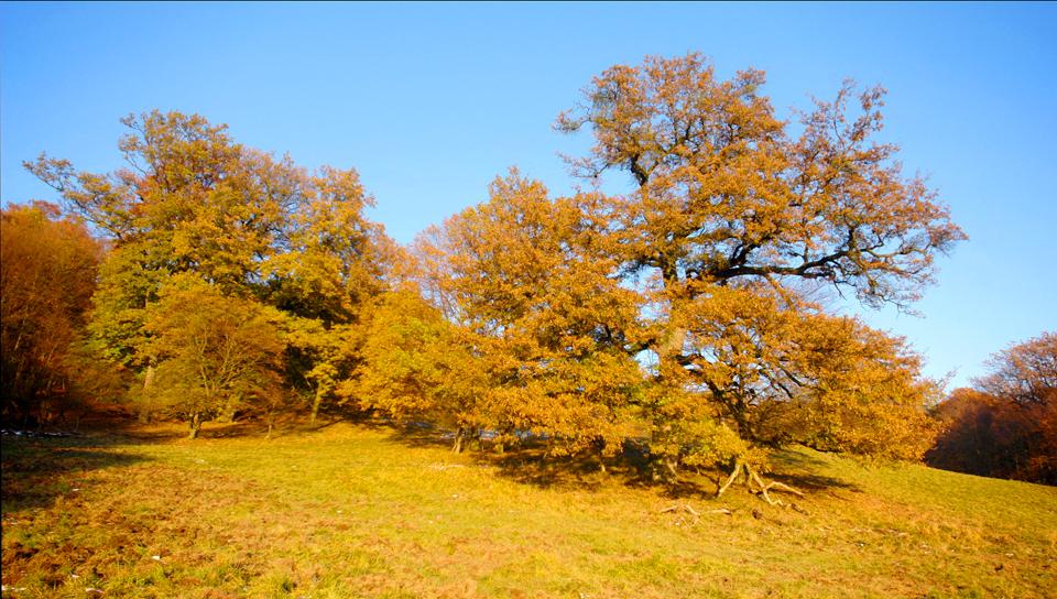 Alter Baum vier Jahreszeiten