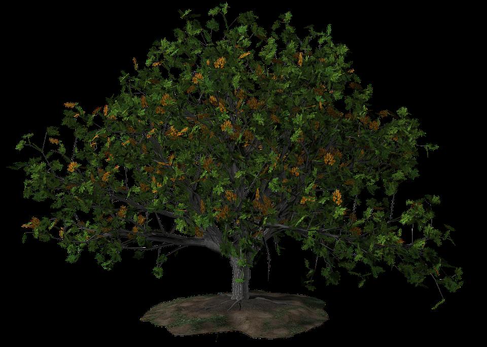 Baum, Sommer, Natur, Landschaft, Blätter, Jahreszeiten - Baum Jahreszeiten PNG
