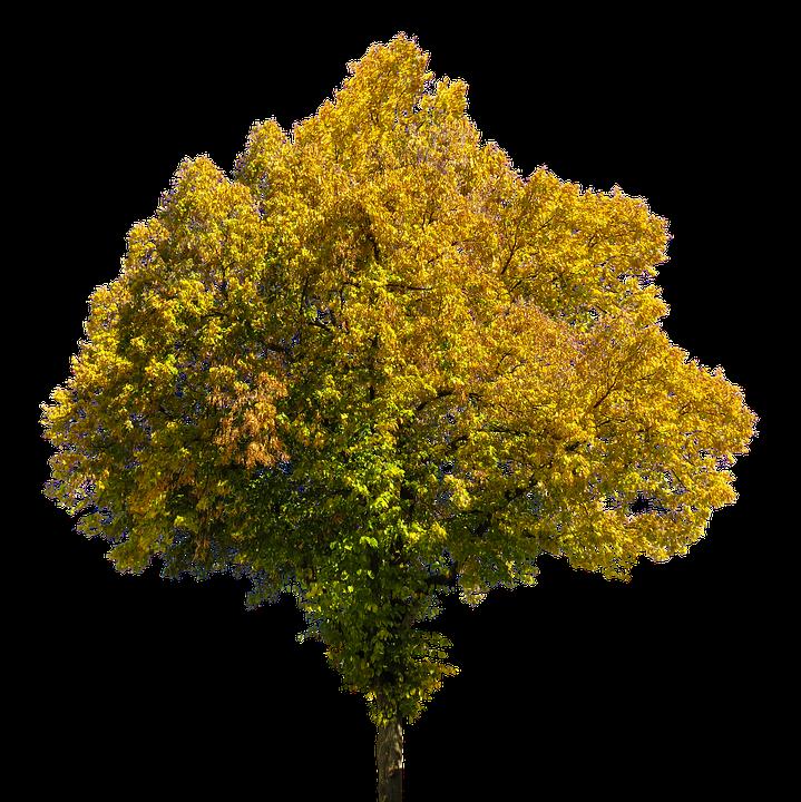 SVG vier Jahreszeiten Baum, d