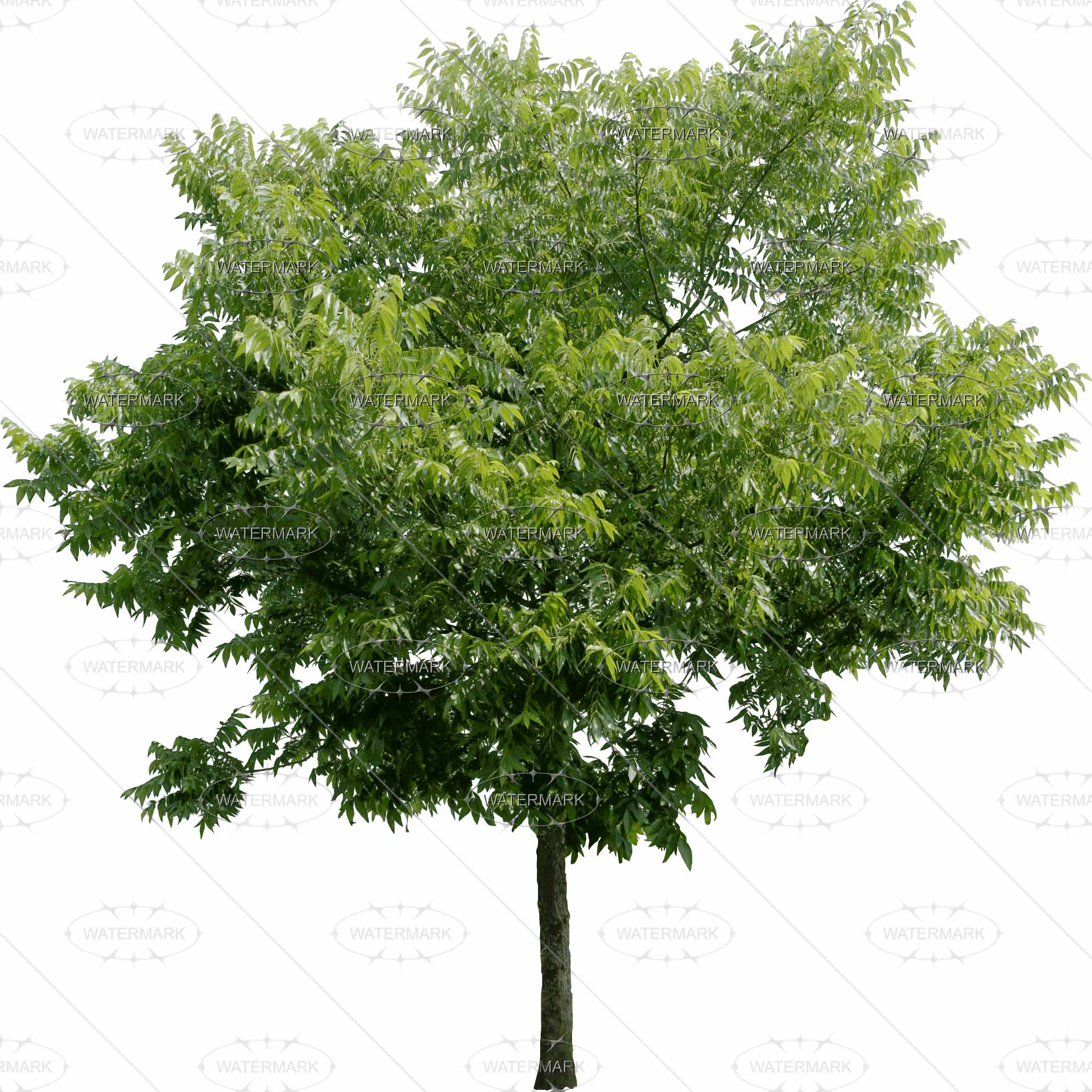 Baum Jahreszeiten PNG - 48200