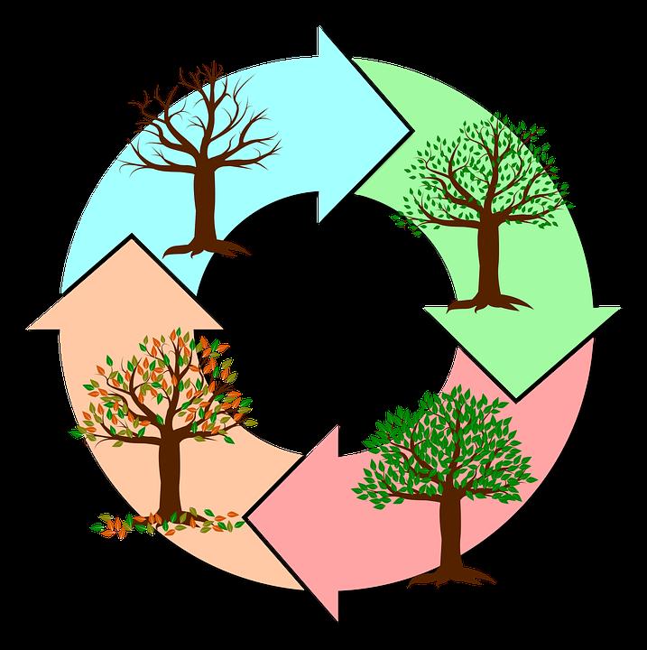 Jahreszeiten, Jahr, Baum, Natur, Herbst, Winter - Baum Jahreszeiten PNG