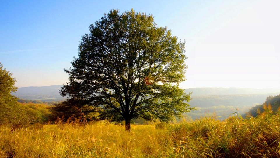Märchen Baum 4 Jahreszeiten