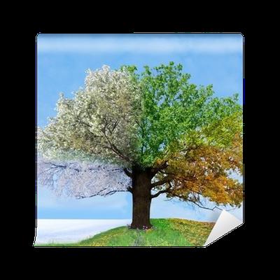 Vinyl-Fototapete Vier Jahreszeiten Baum u2022 Pixers® - Wir leben um zu  verändern - Baum Jahreszeiten PNG